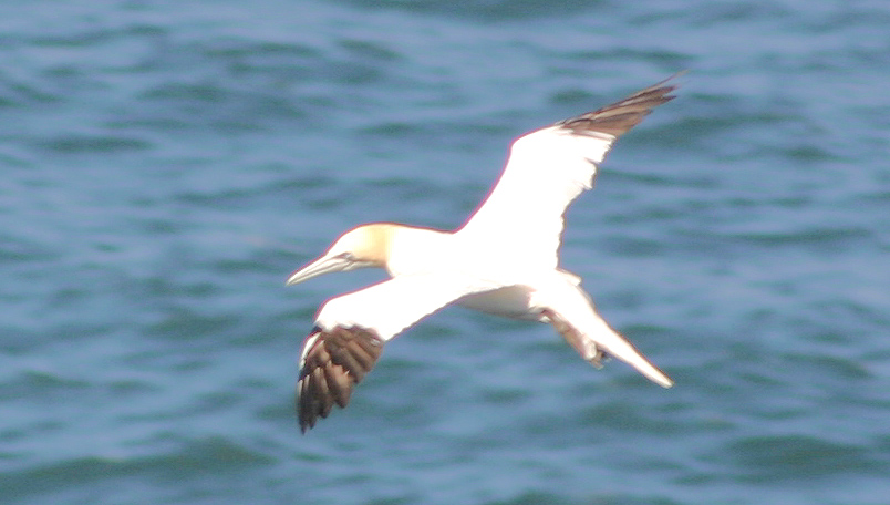 Sea Ocean Birds BIRDS BY COMMON NAME GROUPS - Names of oceans and seas
