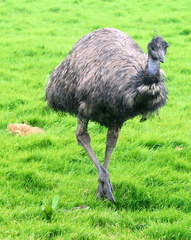 Emu%203.jpg